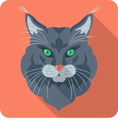 Cat maine coon american longhair icon flat vector