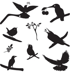 Collection of Bird Silhouettes vector image vector image