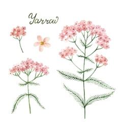 Hand drawn watercolor botanical vector