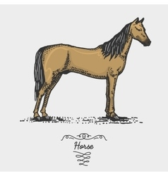horse engraved hand drawn in vector image