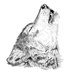 Wolf howls sketch vector