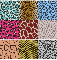 animal skin pattern vector image vector image