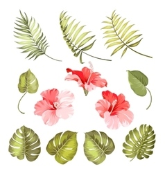 Hibiscus single tropical flower vector