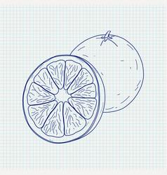 Orange sketch vector