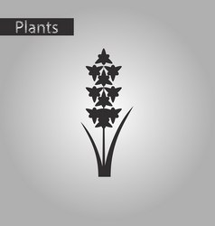 black and white style icon of gladiolus vector image