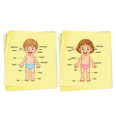Anatomy of boy and girl vector