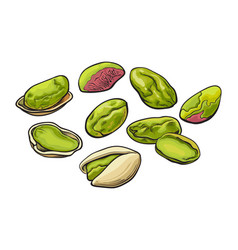 whole and peeled pistachio nut isolated on a white vector image