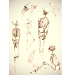 Sketch of skeletons - vector image