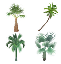exotic tropical realistic palm tree collection set vector image