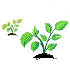 green pant vector image