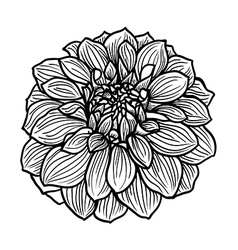 Hand drawn flower vector