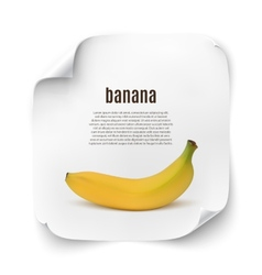 Background with realistic banana vector
