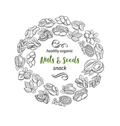 Hand drawn sketch nuts and seeds vector