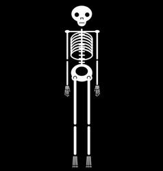 human skeleton halloween icon vector image