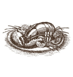 Lobster with lemon slices over white drawn by hand vector image