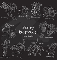 Set of garden berries on dark background vector