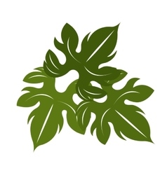 Green tree leave graphic vector