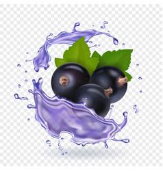 Blackcurrant juice splash forest berries smoothie vector