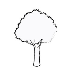 Oak tree foliage ecosystem plant sketch vector
