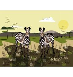 Two zebras vector
