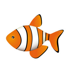 Colorful picture clownfish acuatic animal vector