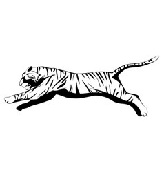 big tiger jumping vector image