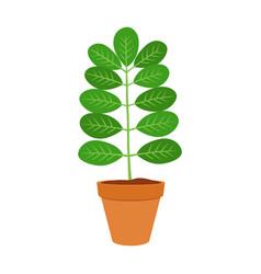 Moringa vegetarian superfood healthy nutrition vector