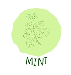 Mint branch vector