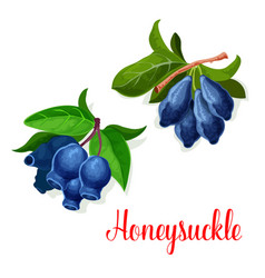 Honeysuckle seed fruits isolated icon vector