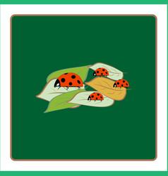 Ladybird isolated on leaf vector
