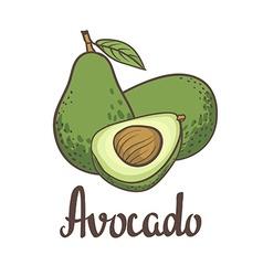 Avocado half of avocado avocado seed Hand drawn vector image