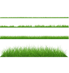 Green grass dense big and small vector