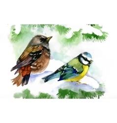 Watercolor forest birds on snowy fir tree branch vector