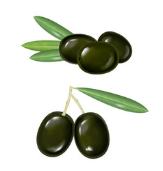black realistic olives vector image