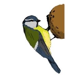 Sketch tit bird vector image
