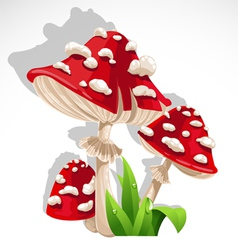 Red fresh mushroom amanita in grass vector