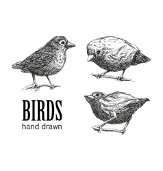 collection of birds eps8 vector image