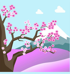 china spring landscape with sakura blossom on tree vector image
