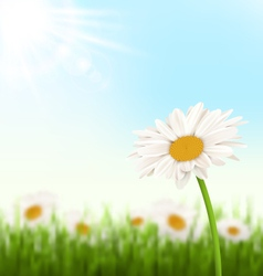 Green grass lawn with white chamomiles flowers and vector