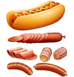 Different kind of meat and hotdog vector image