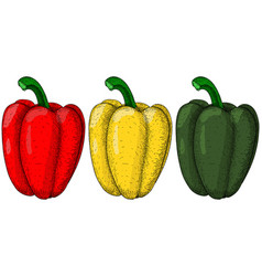 bell peppers hand drawn colored sketch vector image vector image