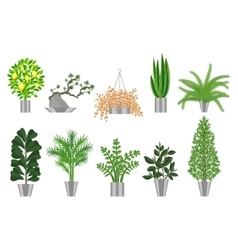 Big trees house plants collection vector