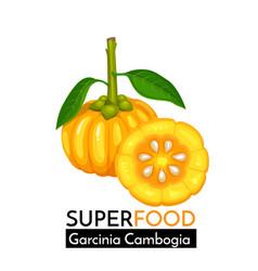 garcinia cambogia icon vector image vector image