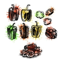 Watercolor hand drawn set of bell pepper vector