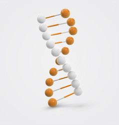 abstract colorful dna molecule isolated on white vector image vector image