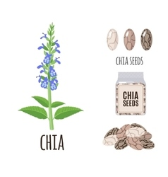Superfood chia seeds set in flat style vector image
