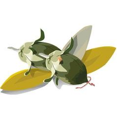 jojoba vector image