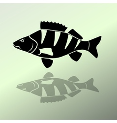 Fish icon set perch european perch redfin perch vector