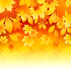 Background of leaves vector