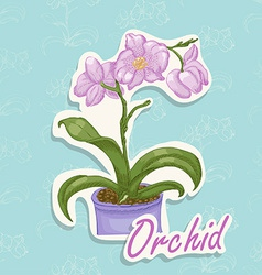 Hand drawing of an orchid vector image vector image